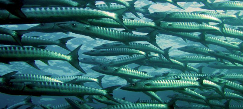 Regime Jurídico da Aquacultura